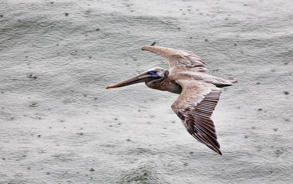 Rainy Day Costa Rica www.lancelaurence.com
